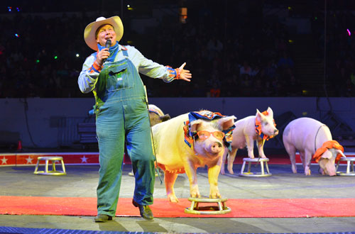 pigs at shrine circus Milwaukee